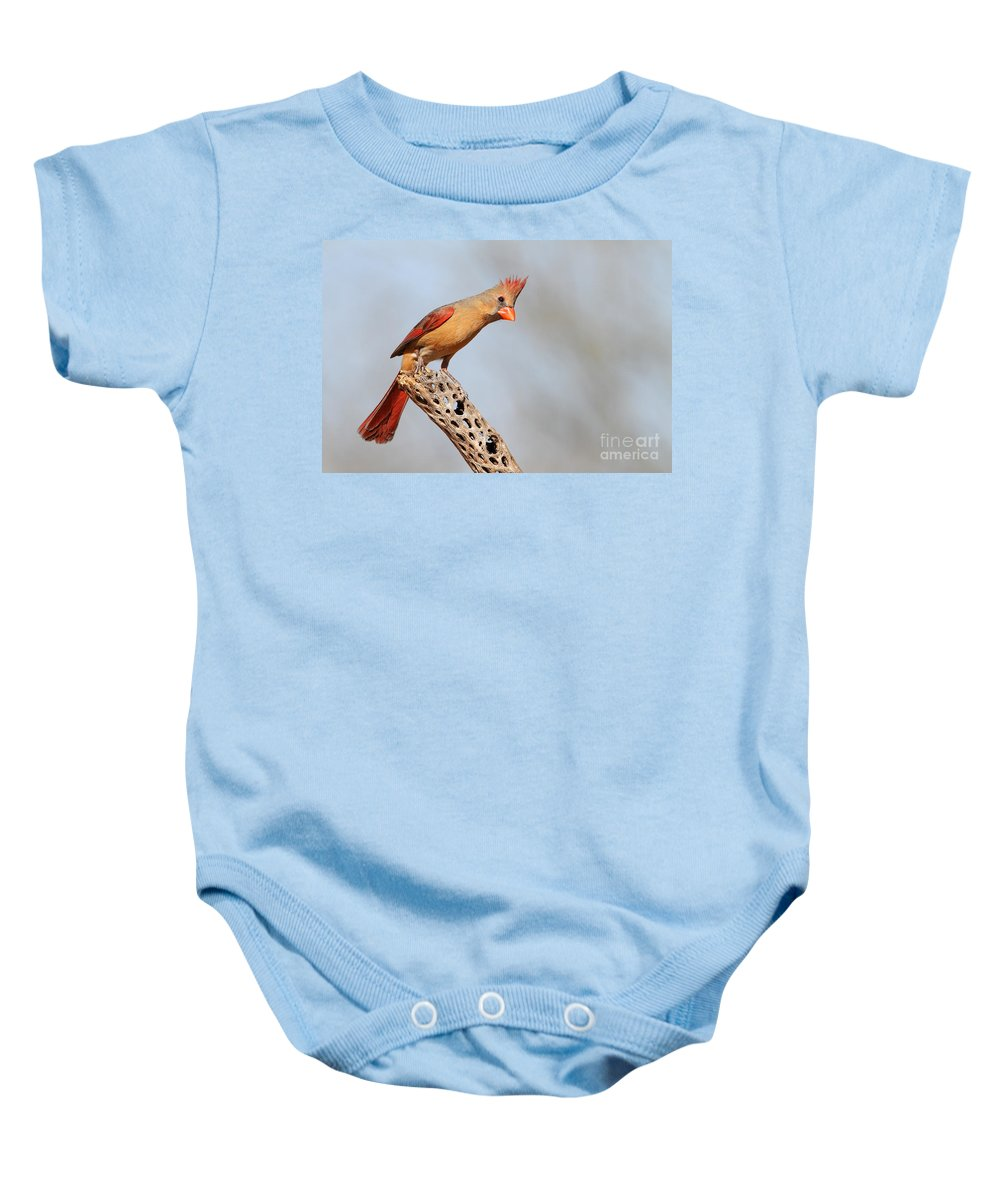 Cardinal Baby Onesie featuring the photograph Curious Cardinal by Bryan Keil