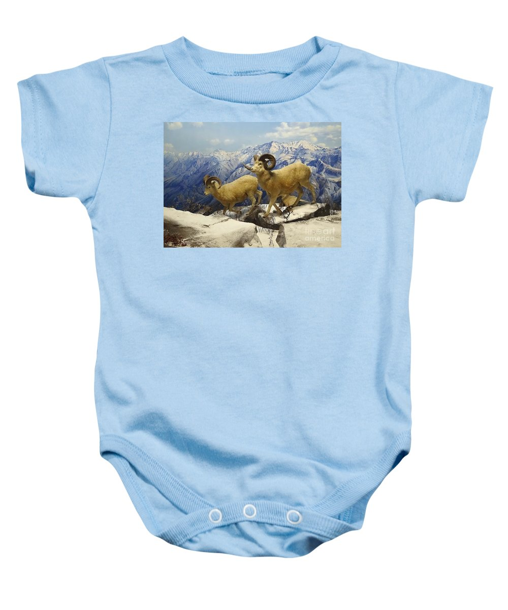 Animals Baby Onesie featuring the photograph Dall Sheep Diorama by Cindy Manero