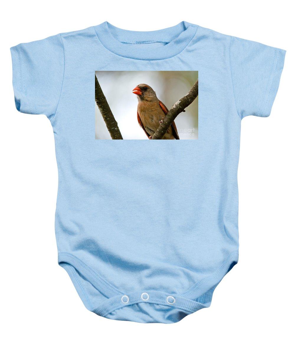 Cardinal Baby Onesie featuring the photograph Hot Cardinal by Cheryl Baxter