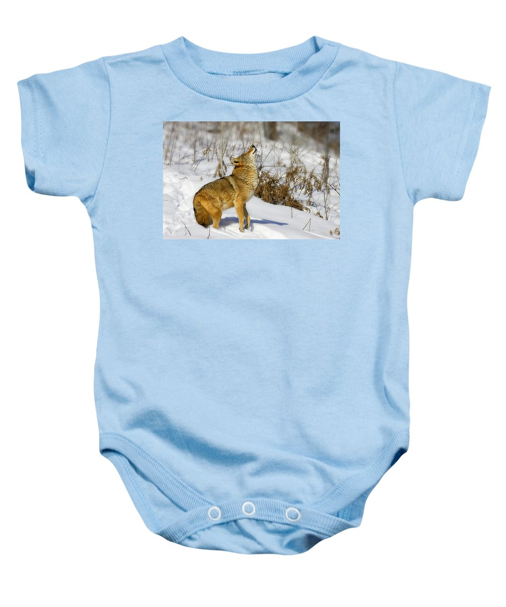 Coyote Baby Onesie featuring the photograph Howl by Jack Milchanowski