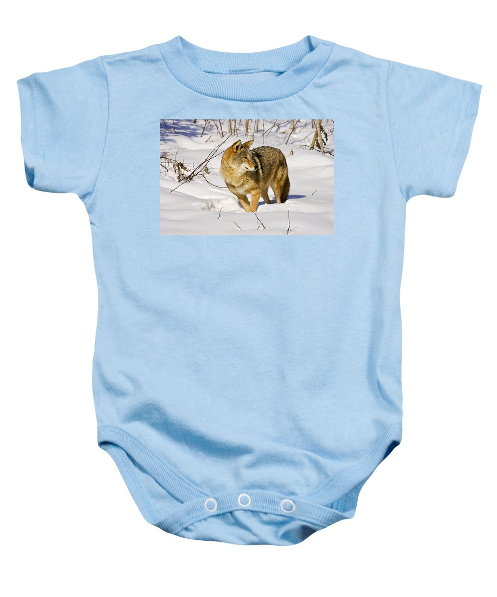 Coyote Baby Onesie featuring the photograph On Alert by Jack Milchanowski