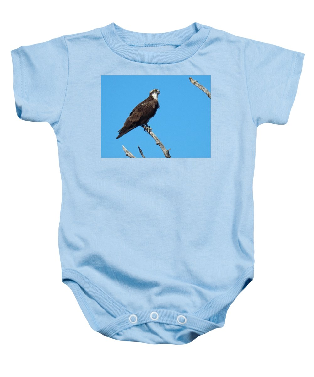 Osprey Baby Onesie featuring the photograph Osprey by Heather Coen