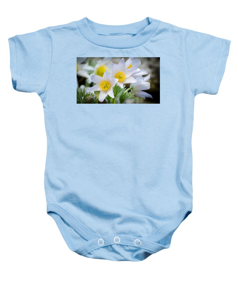 Spring Baby Onesie featuring the photograph Pasque Flower by Nick Field