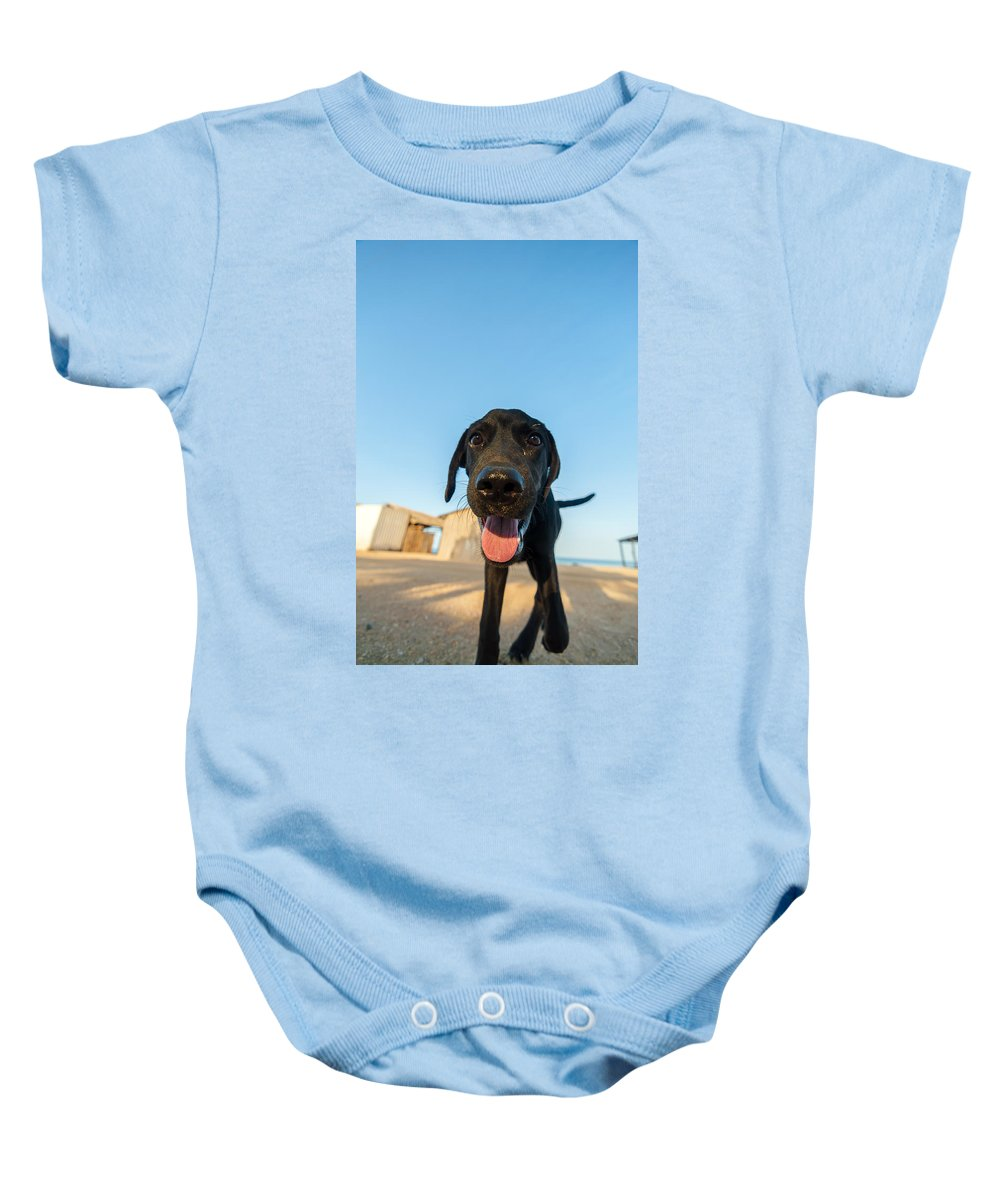 Dog Baby Onesie featuring the photograph Playful Dog Closeup by Jess Kraft