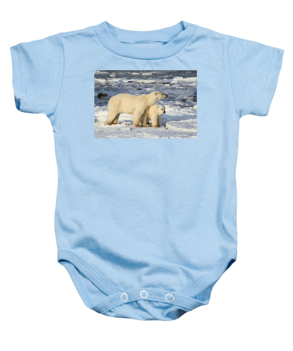 Polar Bears Baby Onesie featuring the photograph Polar Bear Mother And Cub by Carole-Anne Fooks