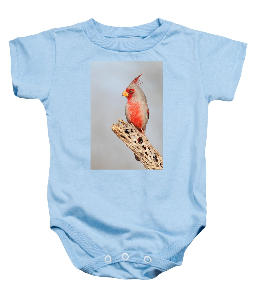 Bird Baby Onesie featuring the photograph Pyrrhuloxia On Cholla Rib by Bryan Keil