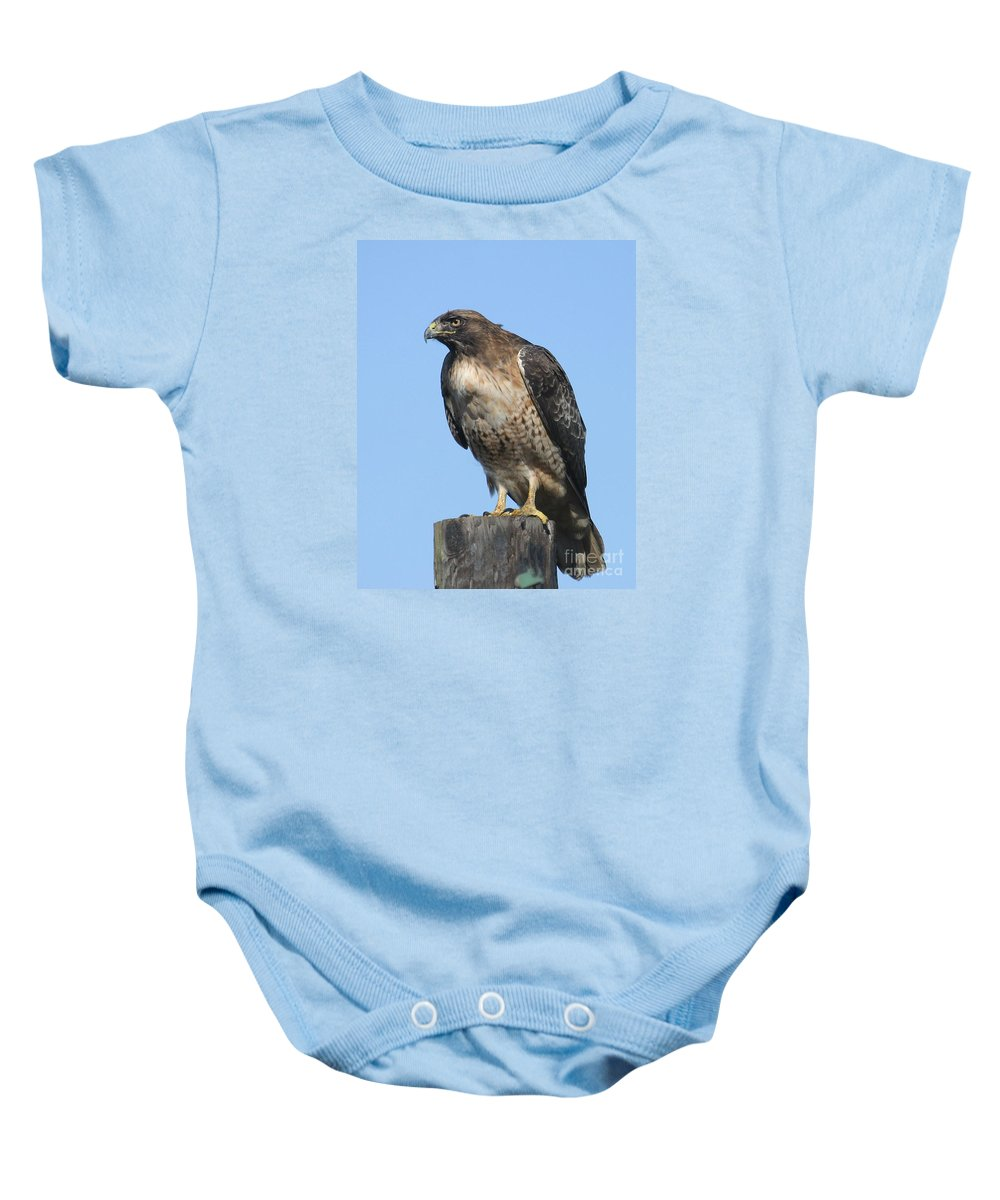 Red-tailed Hawk Baby Onesie featuring the photograph Red-tailed Hawk Monterey California 2008 by California Views Archives Mr Pat Hathaway Archives