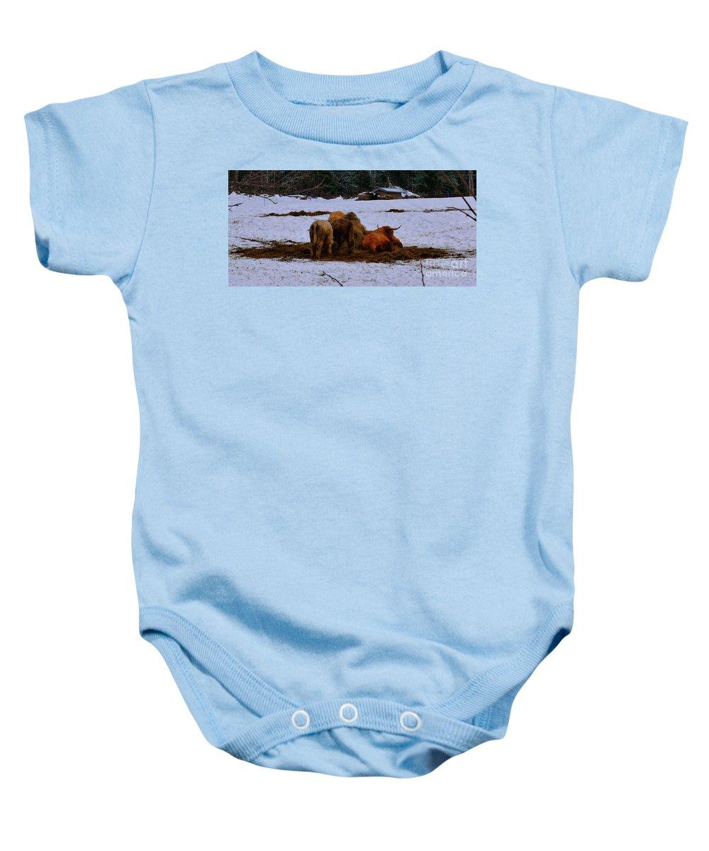 Scottish Highland Cattle Baby Onesie featuring the photograph Scottish Highland Cattle by Nancie DeMellia