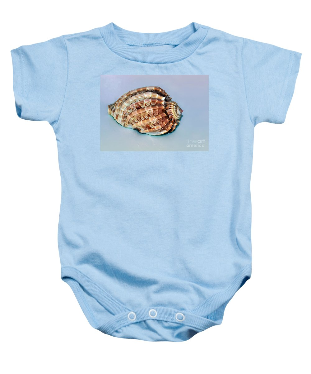 Photography Baby Onesie featuring the photograph Seashell Wall Art 9 - Harpa Ventricosa by Kaye Menner