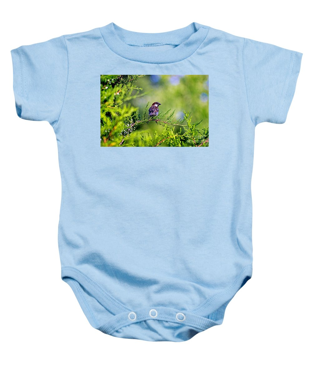 Bird Baby Onesie featuring the photograph Sparrow by Karen Adams