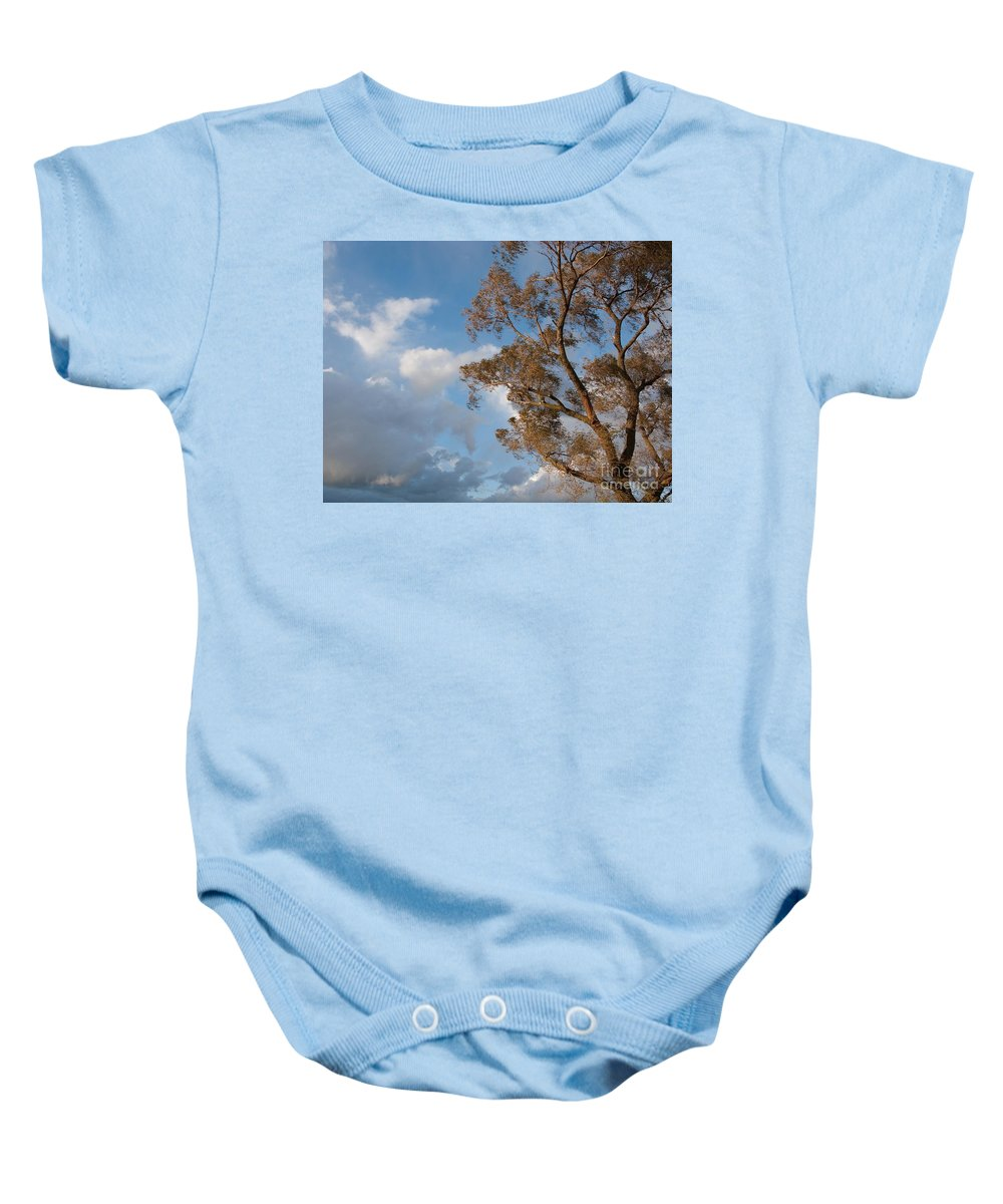 Tree Baby Onesie featuring the photograph Sun And Wind by Ann Horn