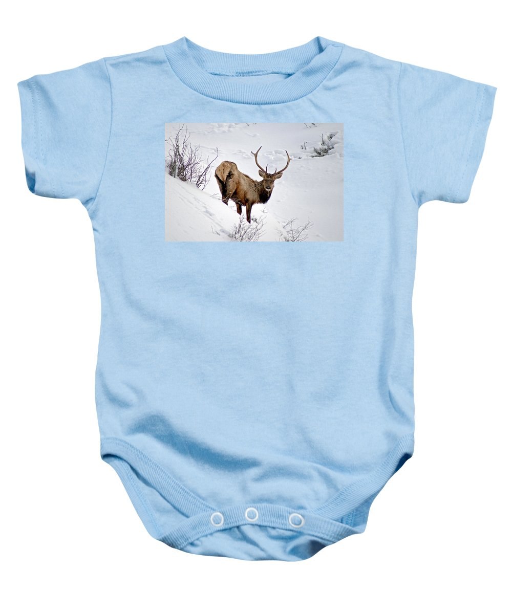 Colorado Baby Onesie featuring the photograph Surviving by Jeremy Rhoades