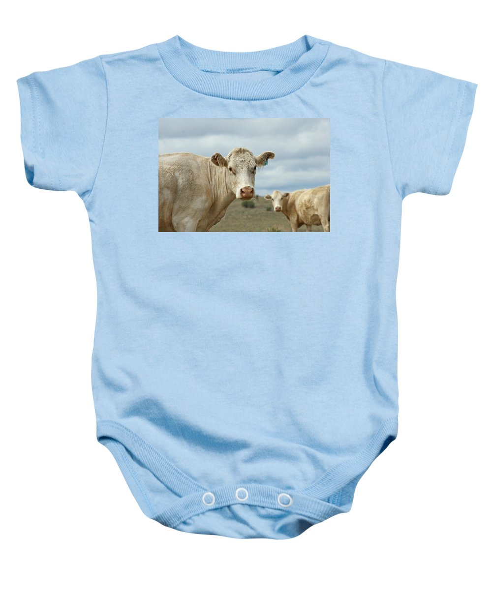 Cow Baby Onesie featuring the photograph The Cows by Ernie Echols