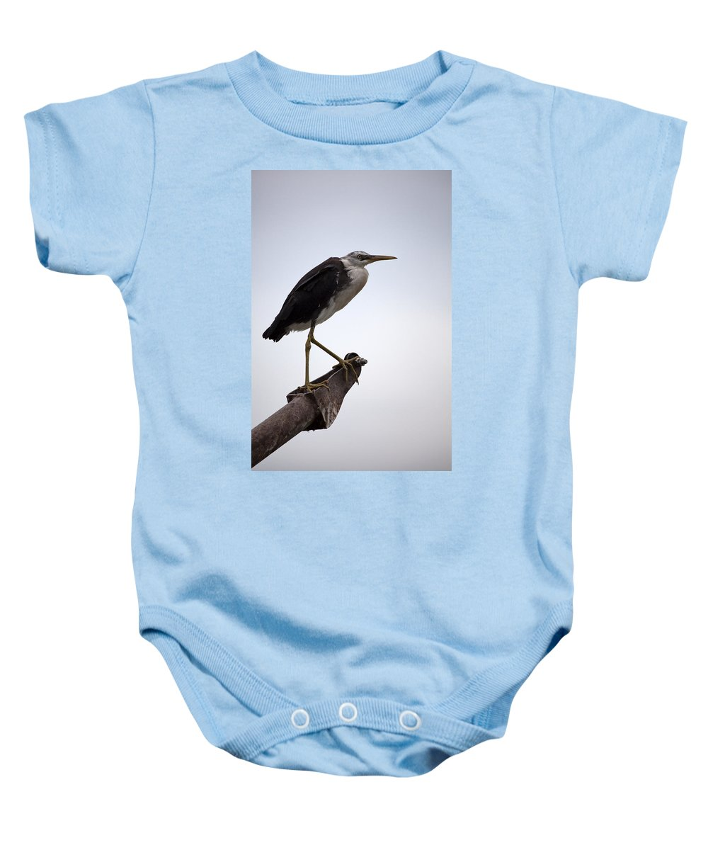 White Necked Heron Baby Onesie featuring the photograph Vantage Point V10 by Douglas Barnard