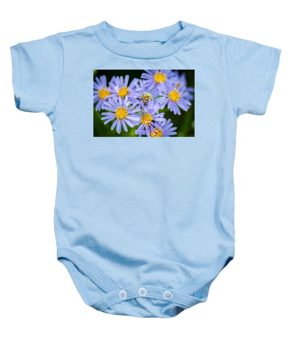 Glacier National Park Baby Onesie featuring the photograph Western Daisies Asters Glacier National Park by Rich Franco