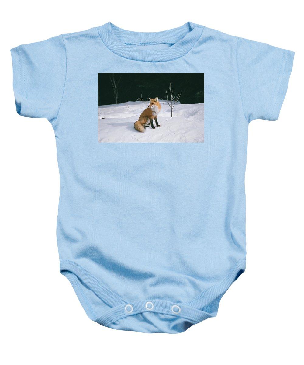 Wildlife Baby Onesie featuring the photograph Winter Fox by David Porteus