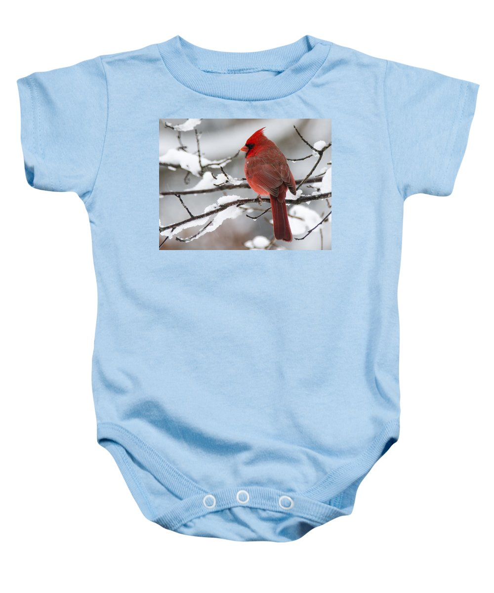 Cardinal Baby Onesie featuring the photograph Winter In Red by Linda Shannon Morgan