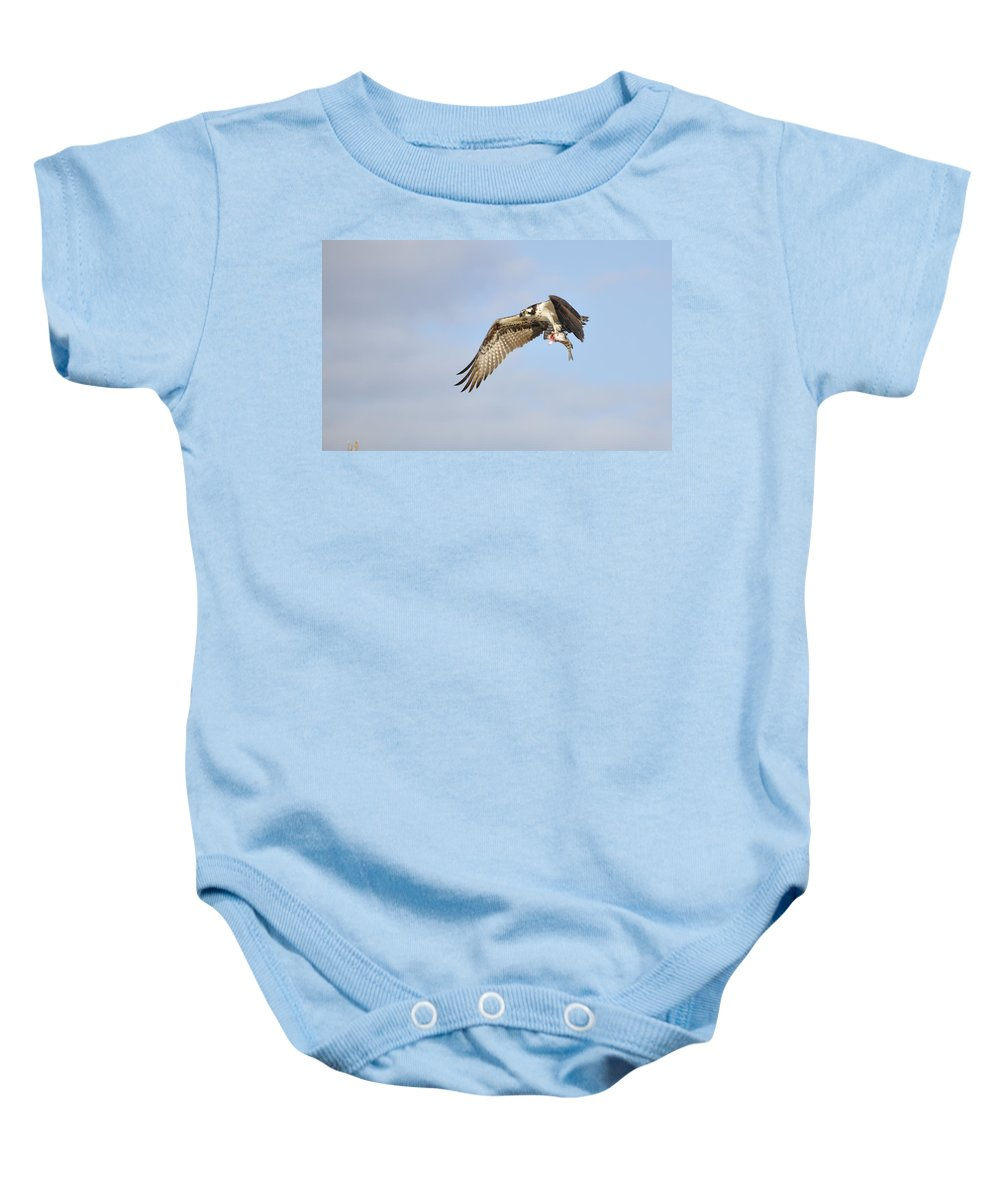 Osprey Baby Onesie featuring the photograph Osprey Lunch To Go I by Christine Stonebridge