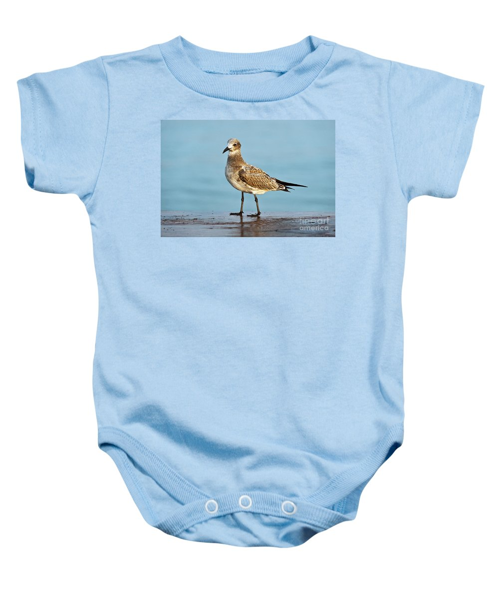 Animal Baby Onesie featuring the photograph Seagull by John Greim
