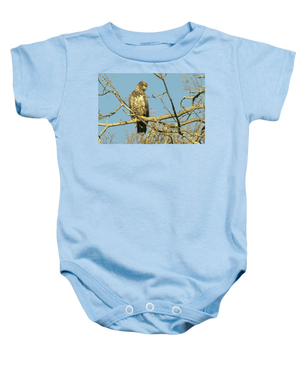 Eagles Baby Onesie featuring the photograph A Young Eagle Gazing Down by Jeff Swan
