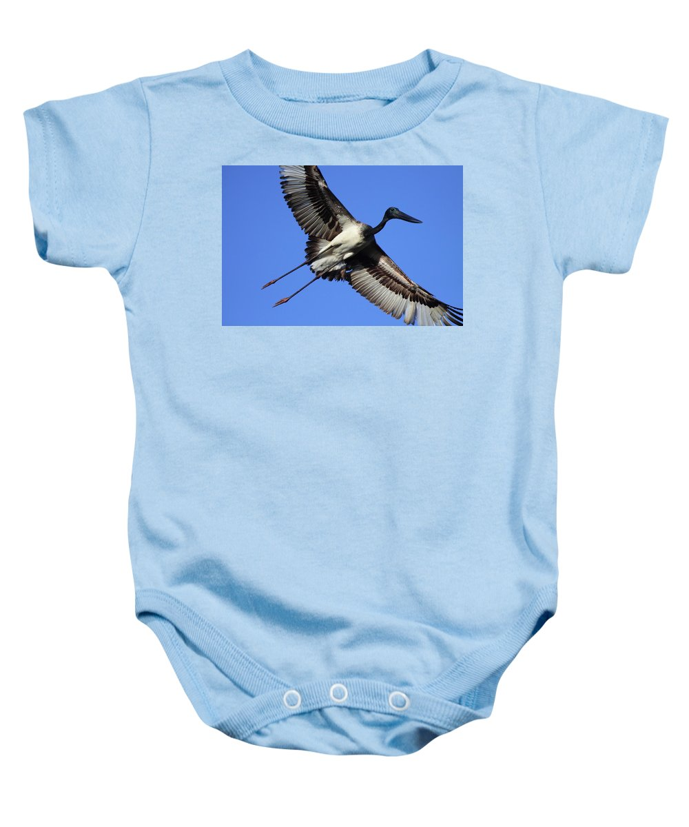 Stork Baby Onesie featuring the photograph Black-necked Stork by Bruce J Robinson