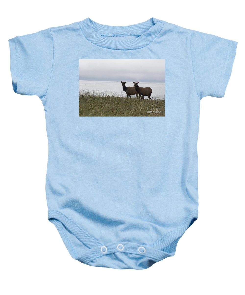 Elk Baby Onesie featuring the photograph Cow Elk Pair On Beach by Jim And Emily Bush