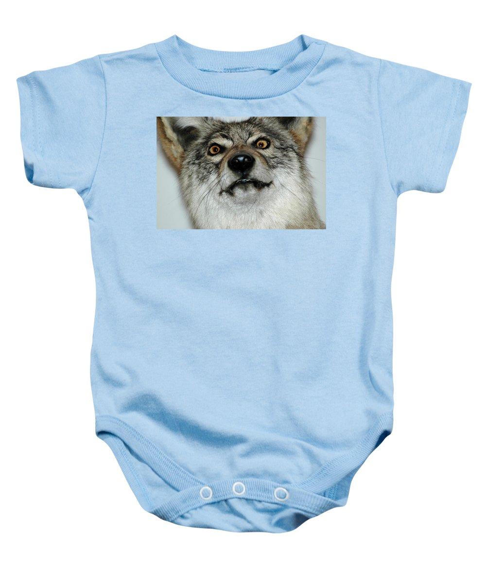 Usa Baby Onesie featuring the photograph Crazy Like A Fox by LeeAnn McLaneGoetz McLaneGoetzStudioLLCcom