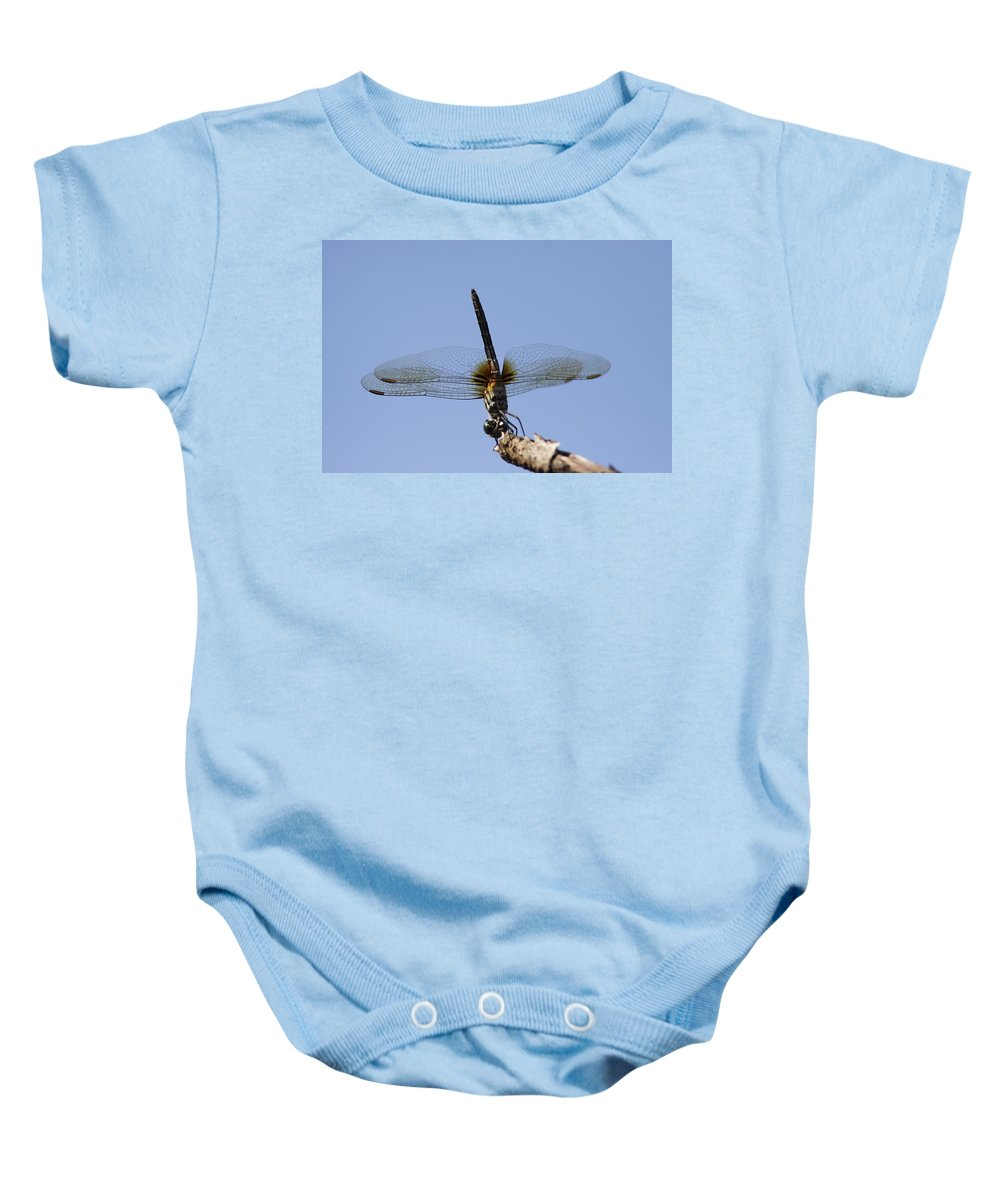 Dragonfly Baby Onesie featuring the photograph Dragonfly - Handstand by Travis Truelove