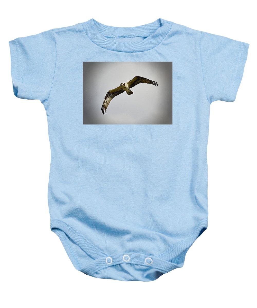 Osprey Baby Onesie featuring the photograph Flight Of The Osprey by Saija Lehtonen