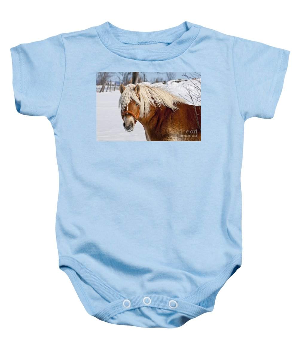 Michael Cummings Baby Onesie featuring the photograph Horse Prince by Michael Cummings
