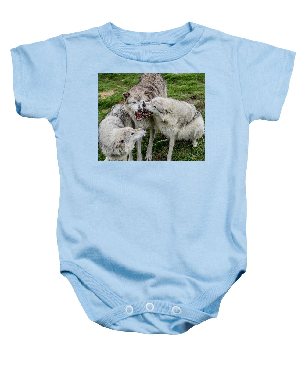 Wolf Pack Baby Onesie featuring the photograph Jawing by Greg Nyquist