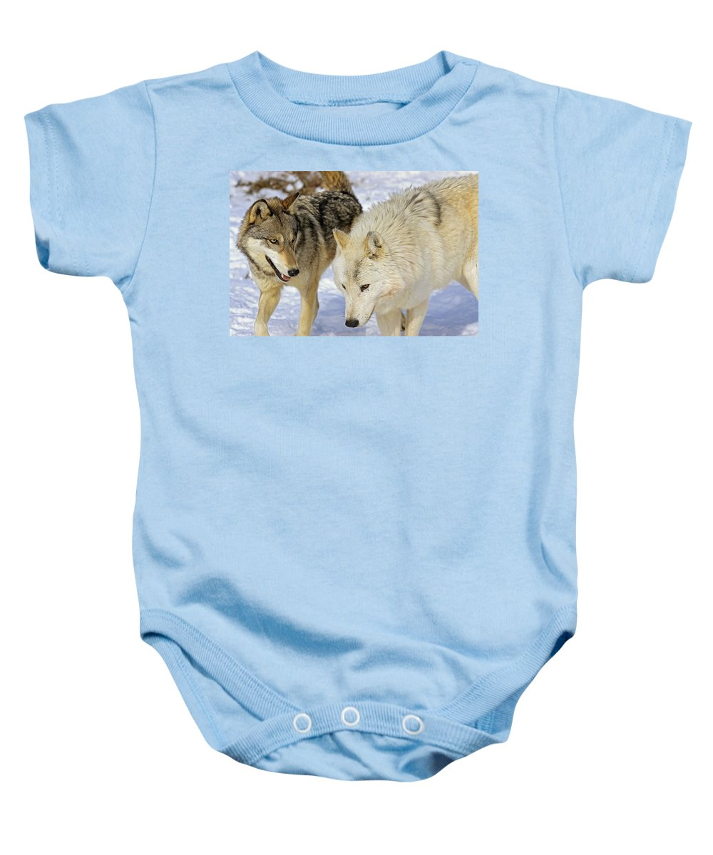 Outdoors Baby Onesie featuring the photograph Members Of Wolf Pack by John Pitcher