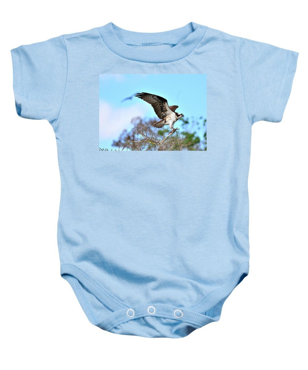 Osprey Baby Onesie featuring the photograph Opsrey Spreading It's Wings by Bill Dodsworth