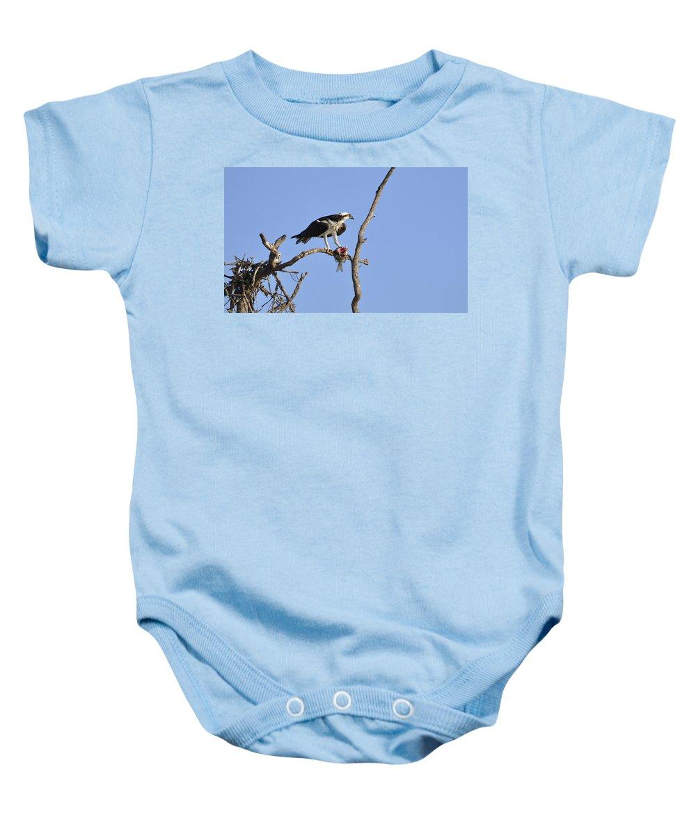 Osprey Baby Onesie featuring the photograph Osprey With Catch II by Christine Stonebridge