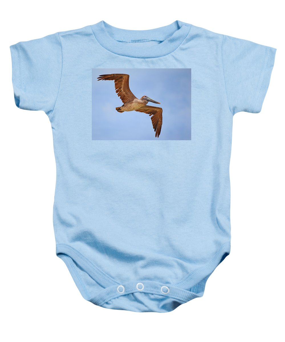 Adult Baby Onesie featuring the photograph Pelican by Paul Fell