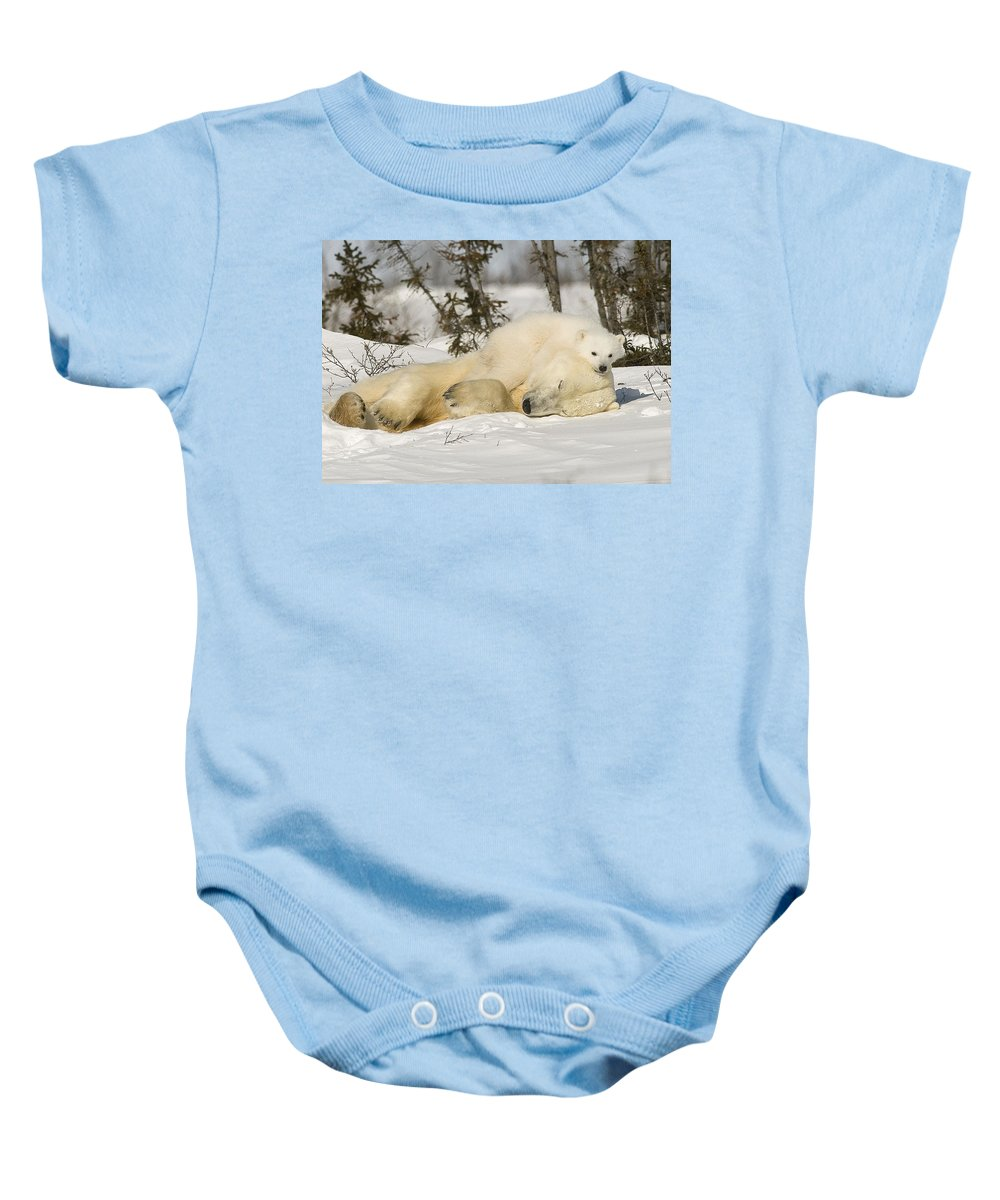Bear Baby Onesie featuring the photograph Polar Bear With Cub In Snow by Robert Brown