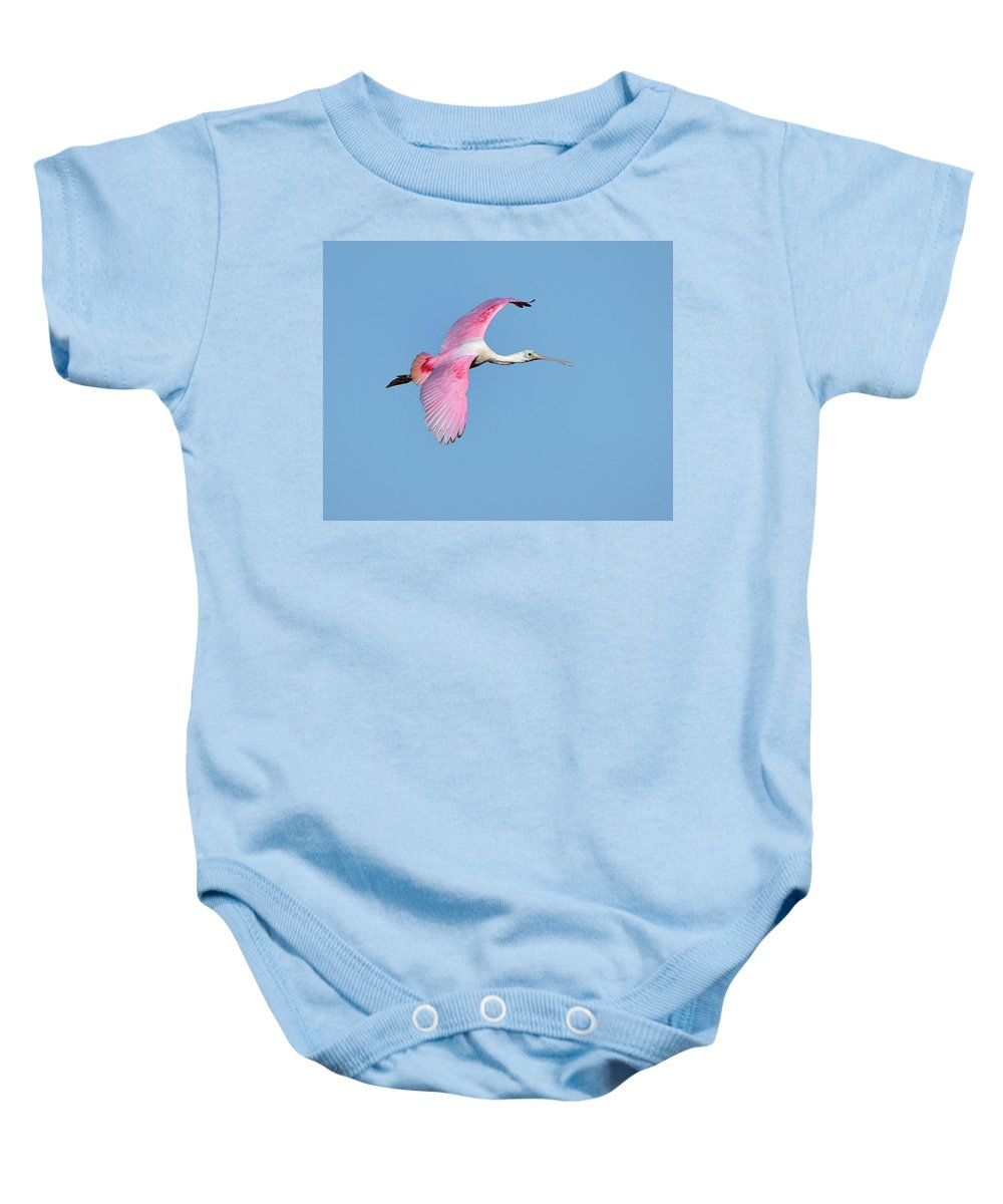 Roseate Spoonbill Baby Onesie featuring the photograph Roseate Spoonbill Inflight by Bill Dodsworth