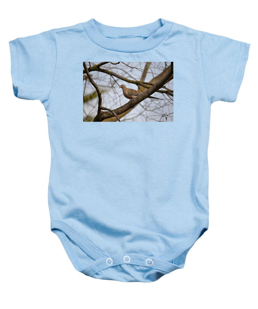 Mourning Dove Baby Onesie featuring the photograph Spring Is Coming by Bill Owen
