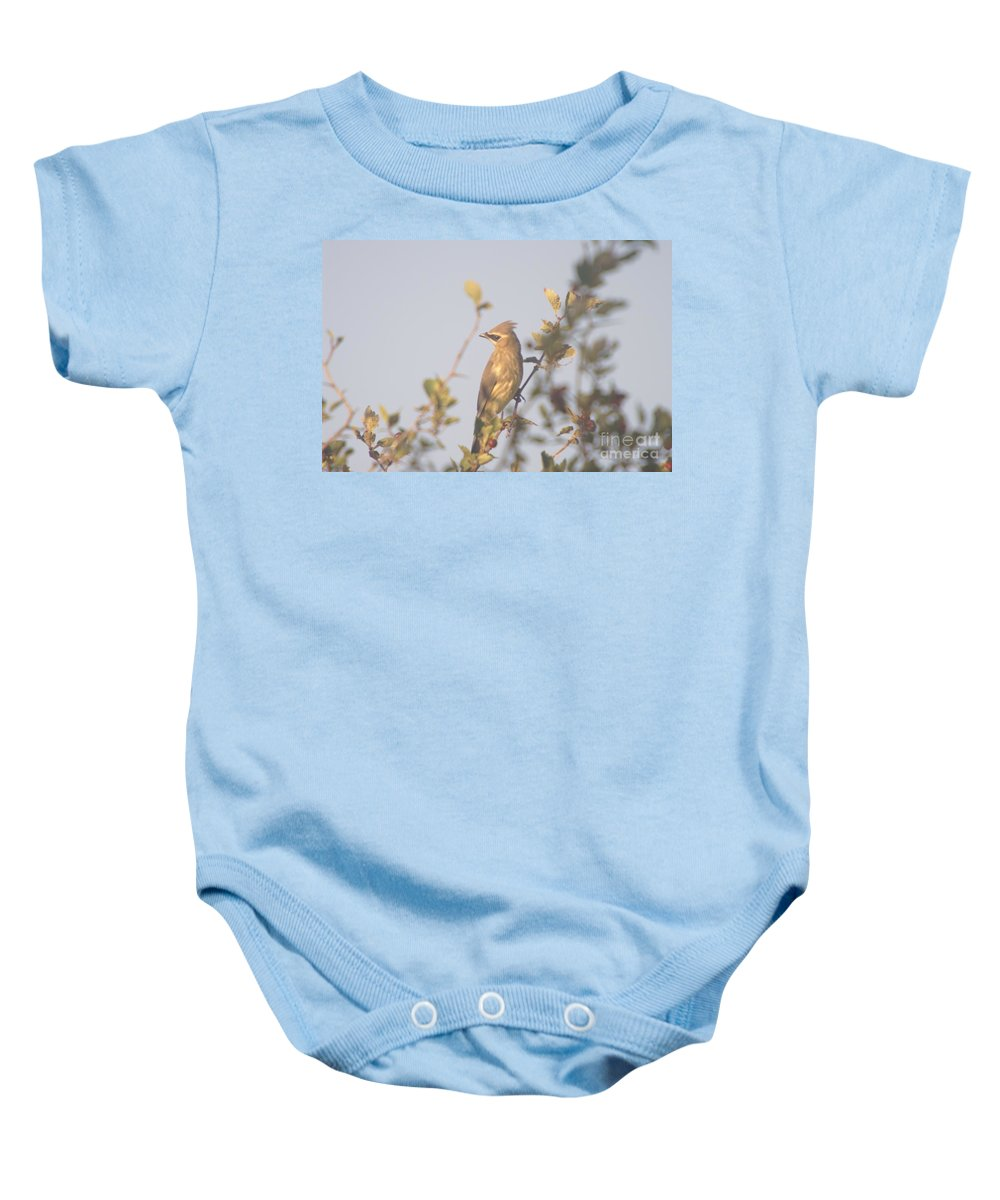Birds Baby Onesie featuring the photograph Wax Wing In Sunshine by Jeff Swan