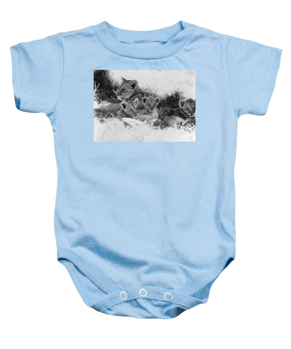 20th Century Baby Onesie featuring the photograph Lions by Granger
