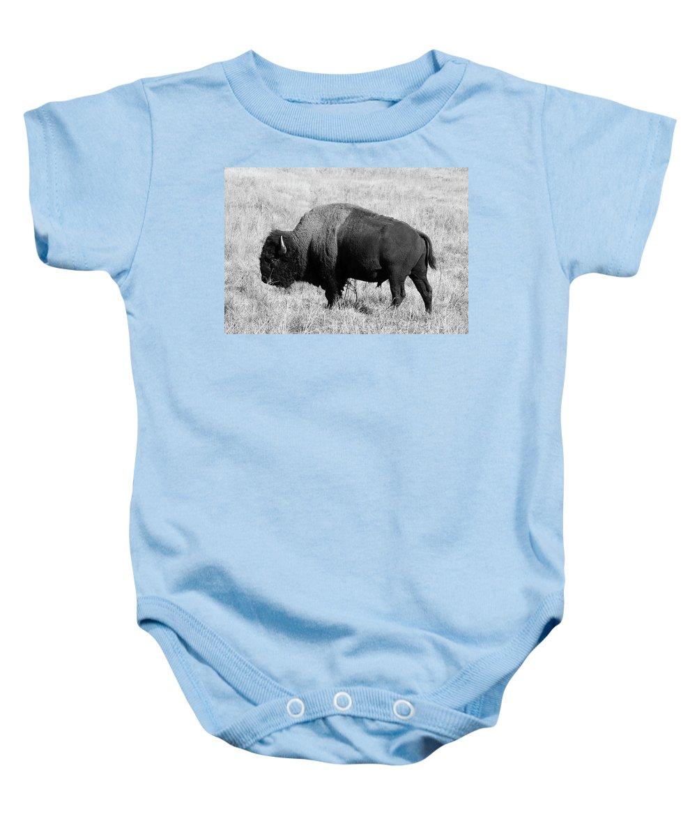 North Dakota Baby Onesie featuring the photograph American Bison Buffalo Bull Feeding On Dry Fall Grass by Donald Erickson