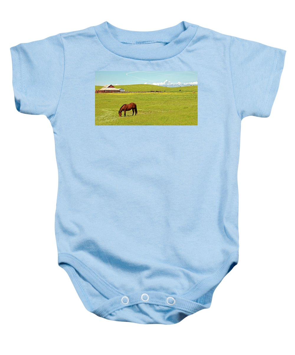 Horse Baby Onesie featuring the photograph Horse Grazing by Robert Urwyler