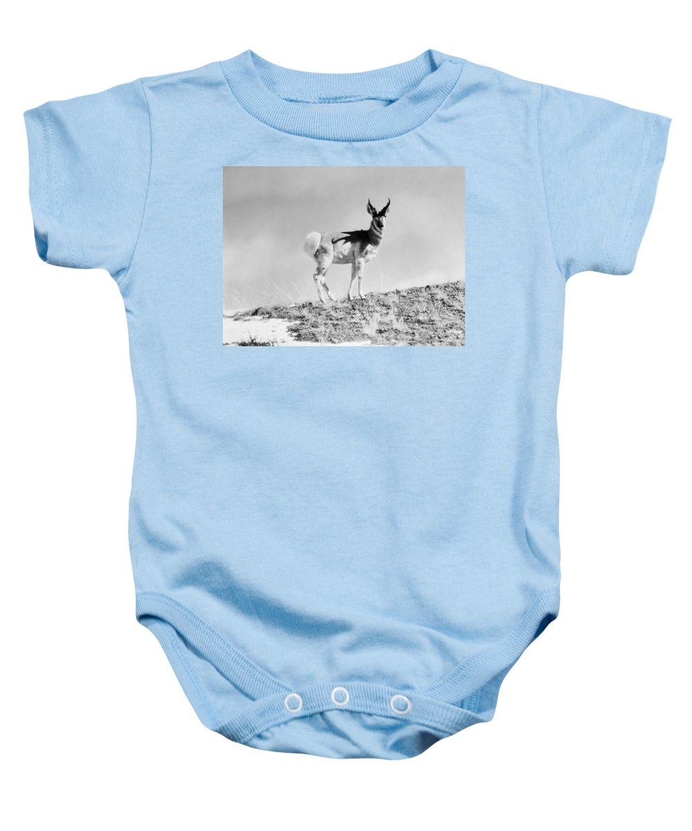 20th Century Baby Onesie featuring the photograph Prong-horn Antelope by Granger
