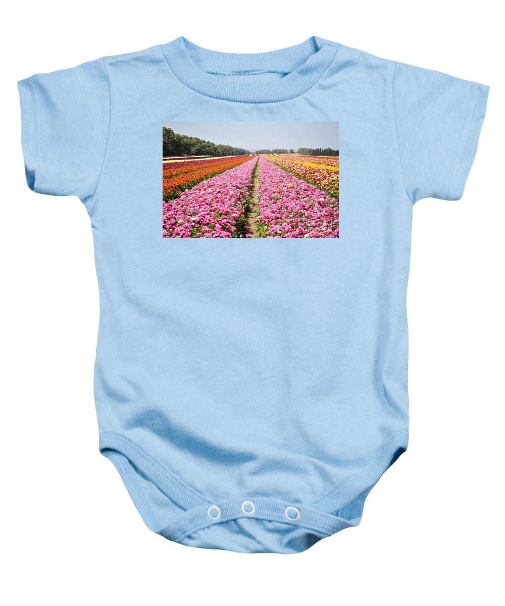 Pink Baby Onesie featuring the photograph field of cultivated Buttercup by Doron Magali
