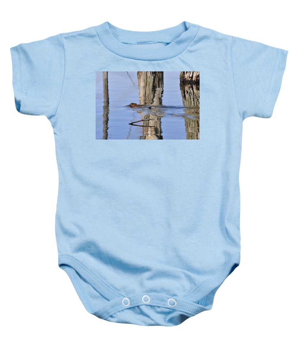 Animals Baby Onesie featuring the photograph Beaver In Motion by David Arment