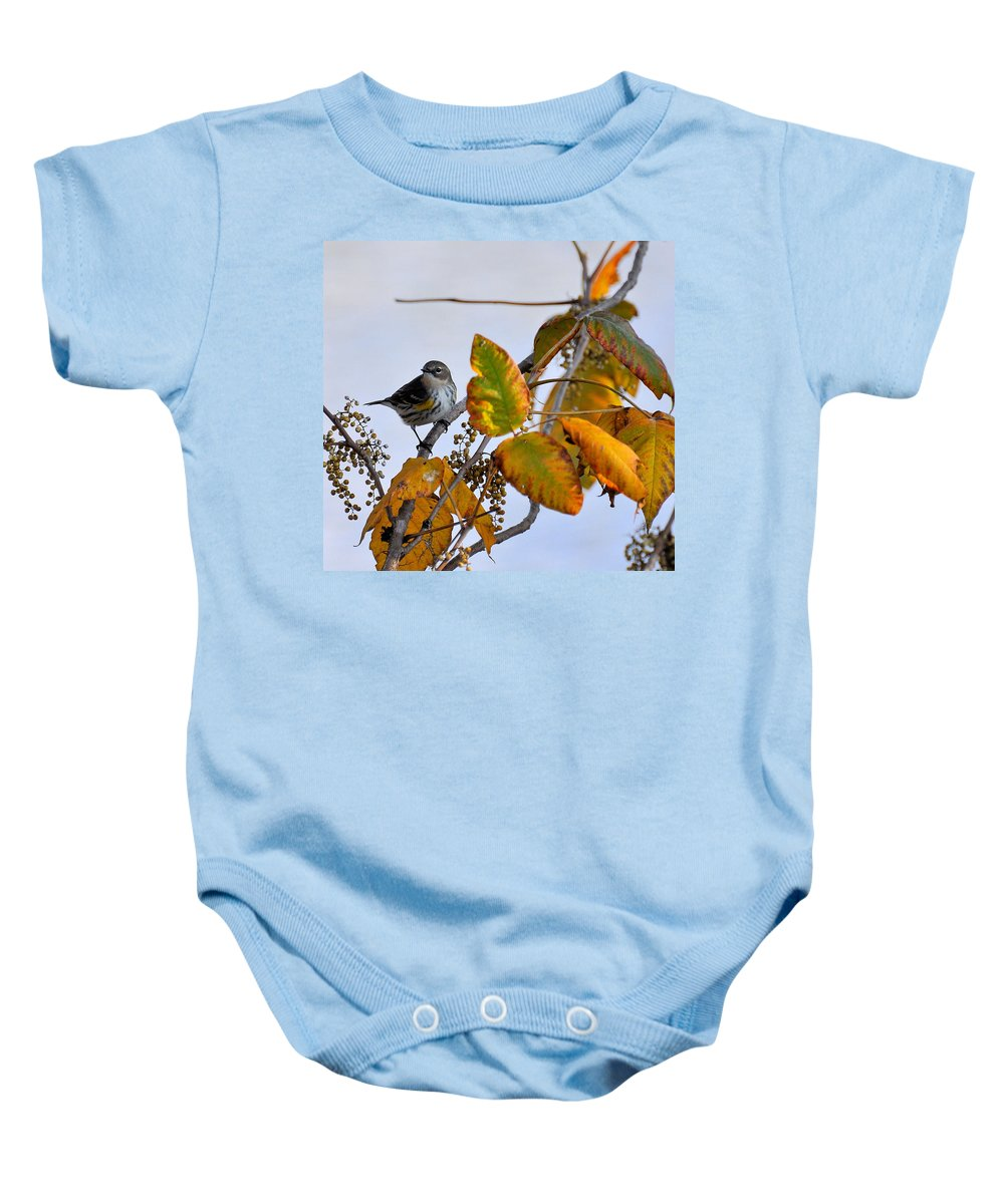 Birds Baby Onesie featuring the photograph Birds And Berries by Todd Hostetter