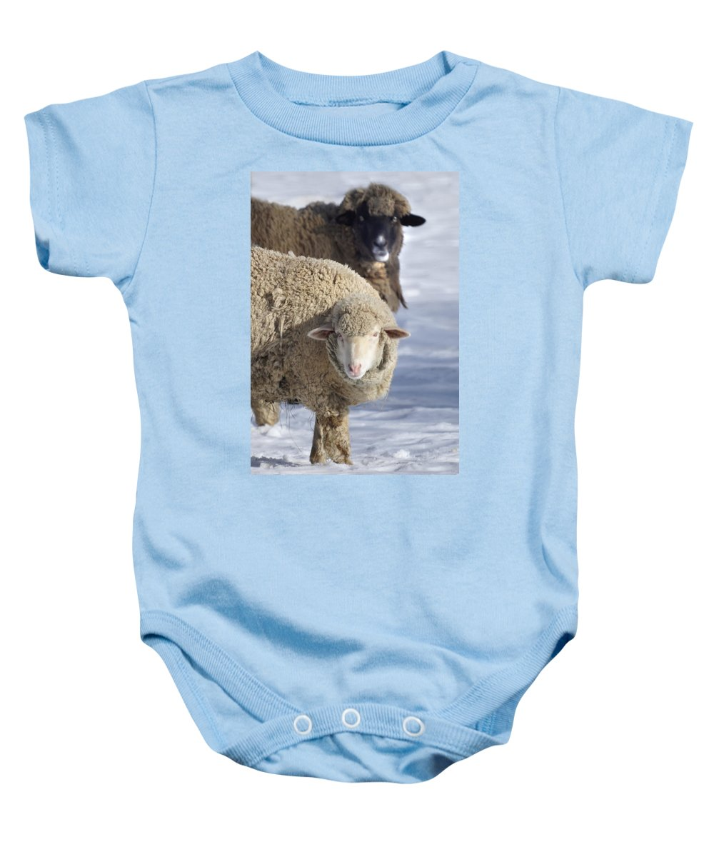 Sheep Baby Onesie featuring the photograph Black And White by Heather Coen