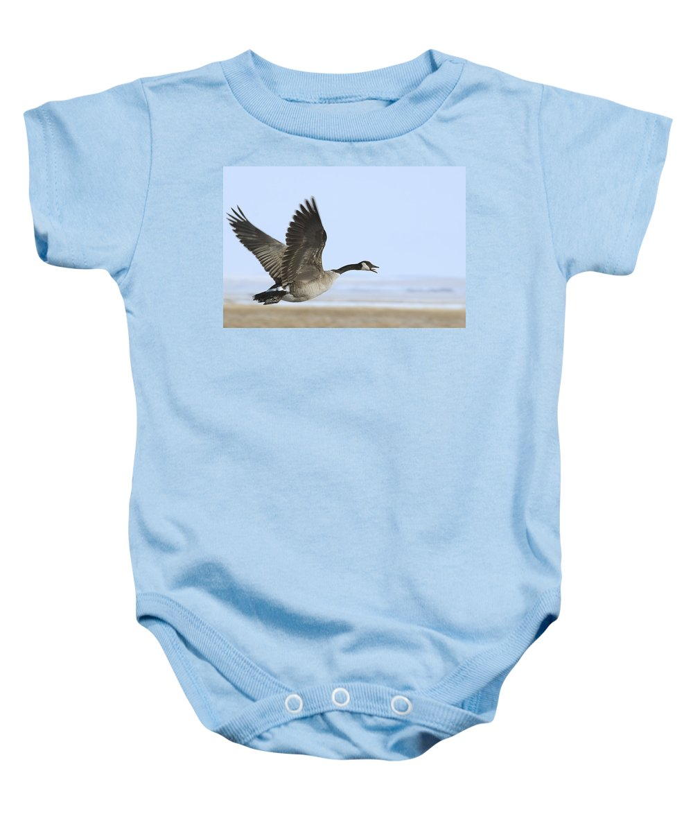 Goose Baby Onesie featuring the photograph Canada Goose by Gary Beeler