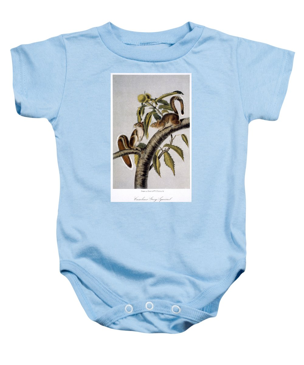 1846 Baby Onesie featuring the photograph Carolina Grey Squirrel by Granger