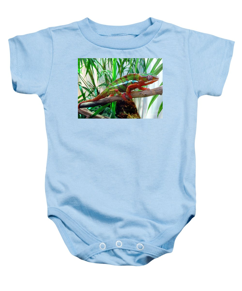 Chameleon Baby Onesie featuring the photograph Colorful Chameleon by Nancy Mueller